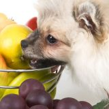 Dogs can or can't Eat Fruits