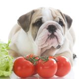 vegetables dogs can or cannot eat
